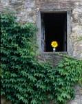 Badia a Coltibuono, Tuscany