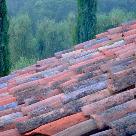 Roof and Cypress, Tuscany, 2008
