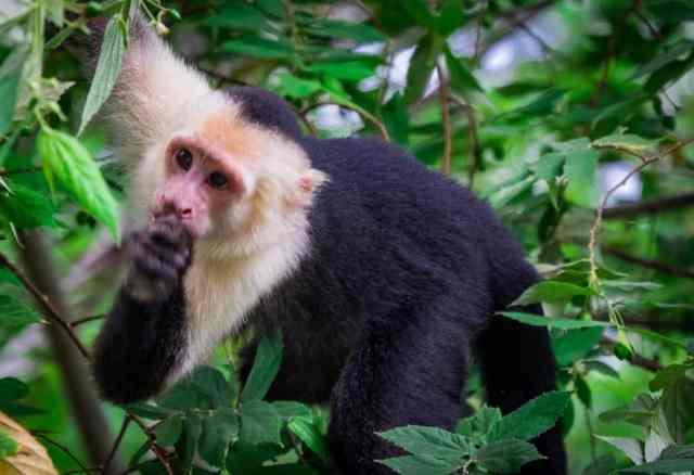 1.2 Monkeys-005