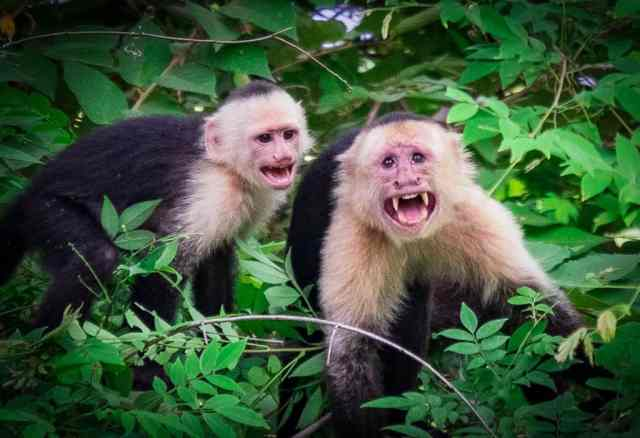 1.2 Monkeys-026-Edit