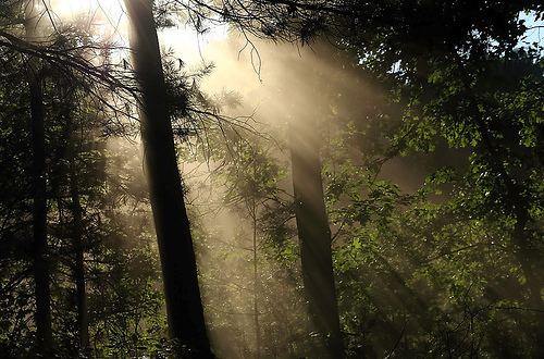 15 Cool Pictures of Sun Rays Through Trees
