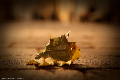 Lonely leaf left alone