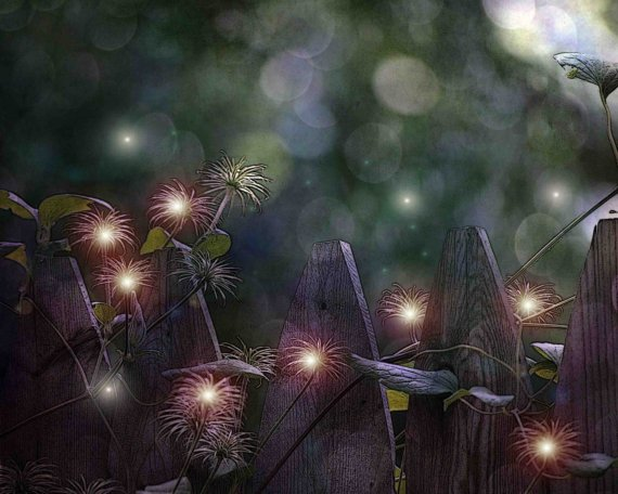 seed pods, purple, bokeh, One Enchanted Evening