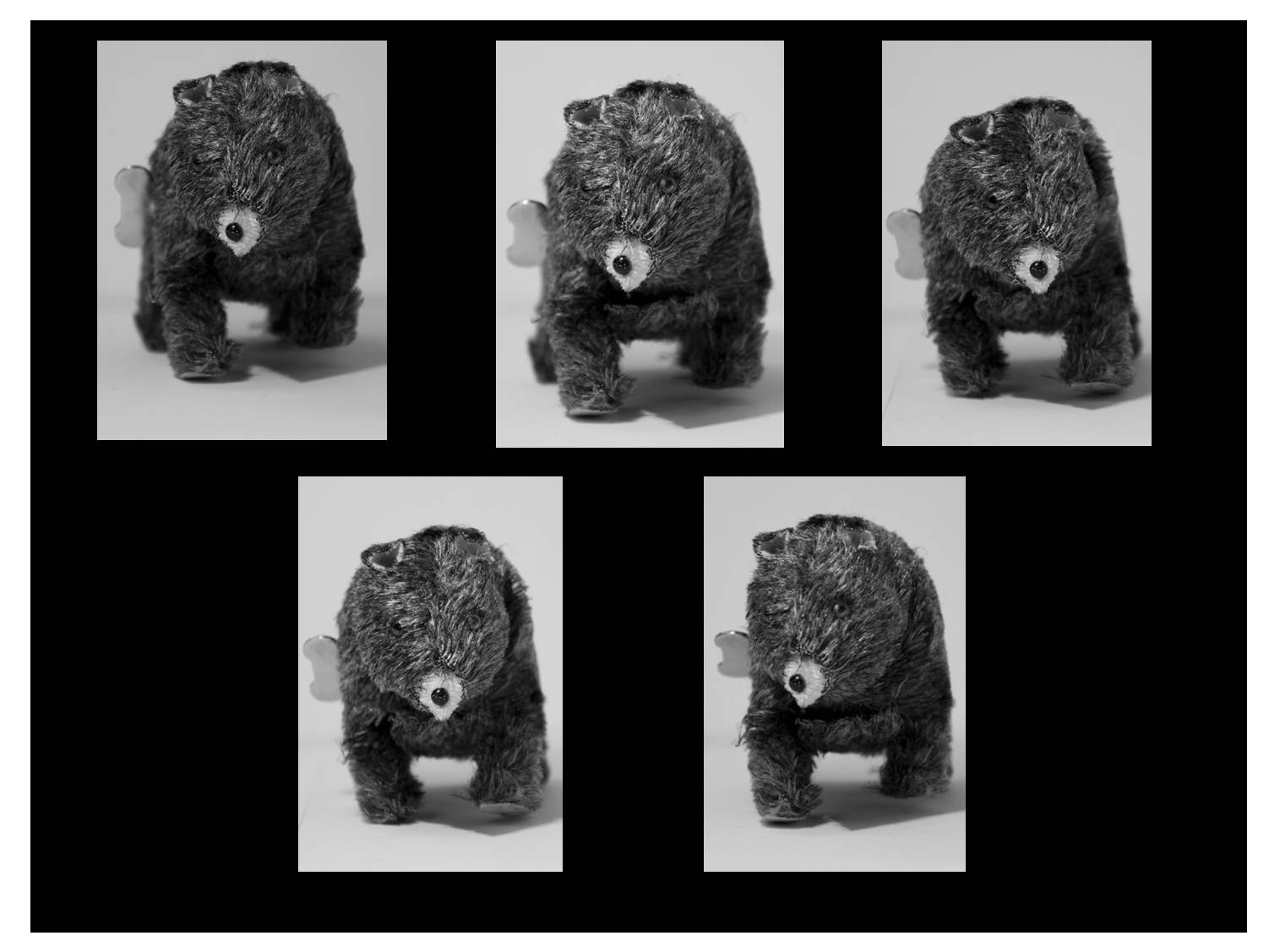 Bear In Motion Photography Revision