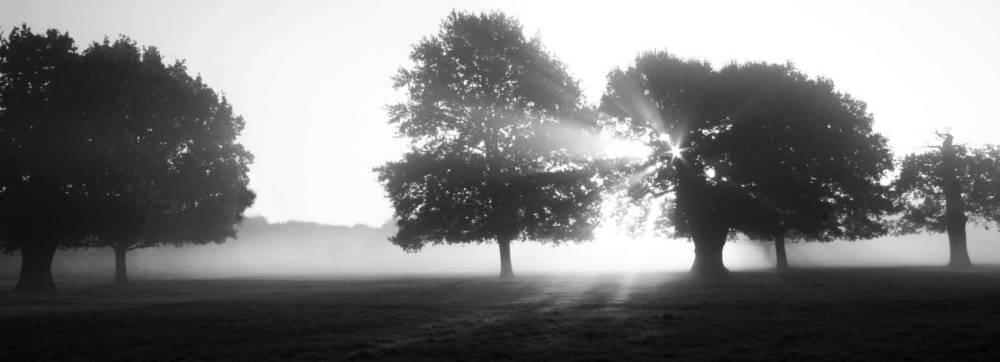 Misty morning - light shafts cut through the mist