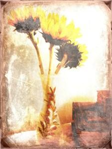 • Sunflowers •<br />By Ann H. LeFevre •  Three creative jump start ideas