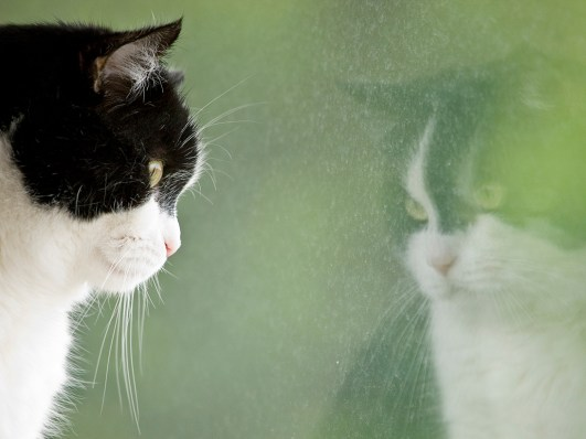 Black and white cat looking out of the window with a reflection of himself