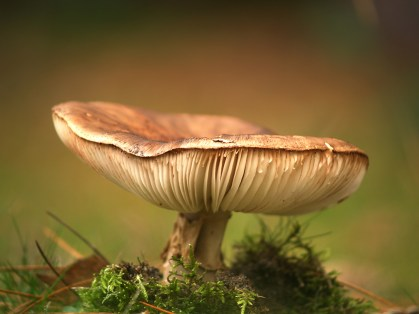 Beautiful toadstool