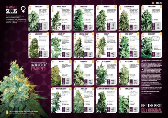 Sensi Seeds   Design, Photoshop, DTP
