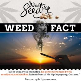 Weedseedshop | Social Media - Design, Photoshop