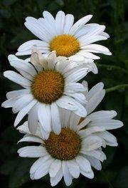 Simply Beautiful by Diana Birdwell