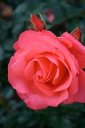 Flower 2 by Kenneth Ferguson