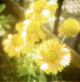 1307-flowers003