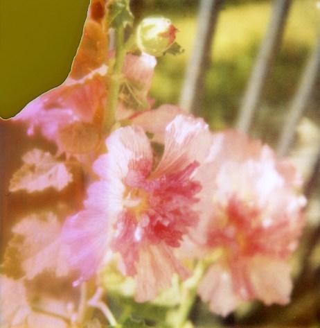1307-flowers005
