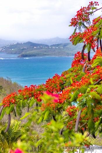 Martinique_020-christophe-Mastelli-photographe-marseille.jpg