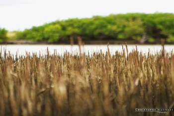 christophe-mastelli-photographe-172.jpg
