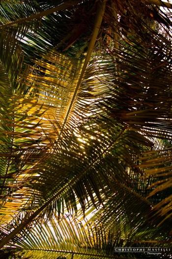 christophe-mastelli-photographe-182.jpg