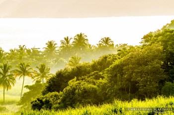 Martinique_036-christophe-Mastelli-photographe-marseille.jpg
