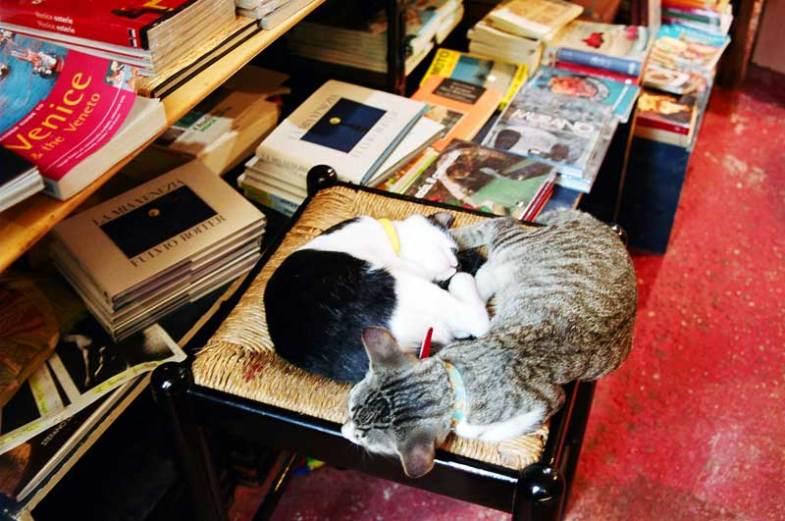Cult Cats