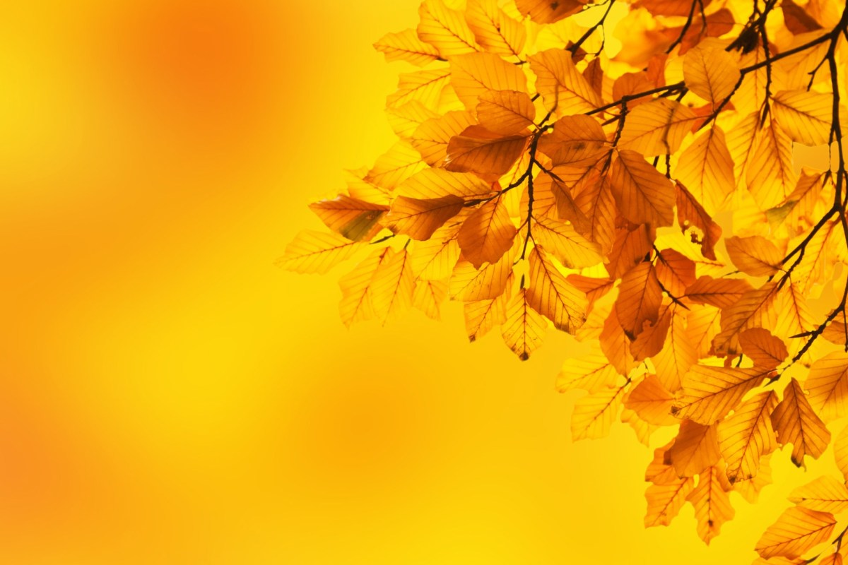 Autumn leaves yellow background