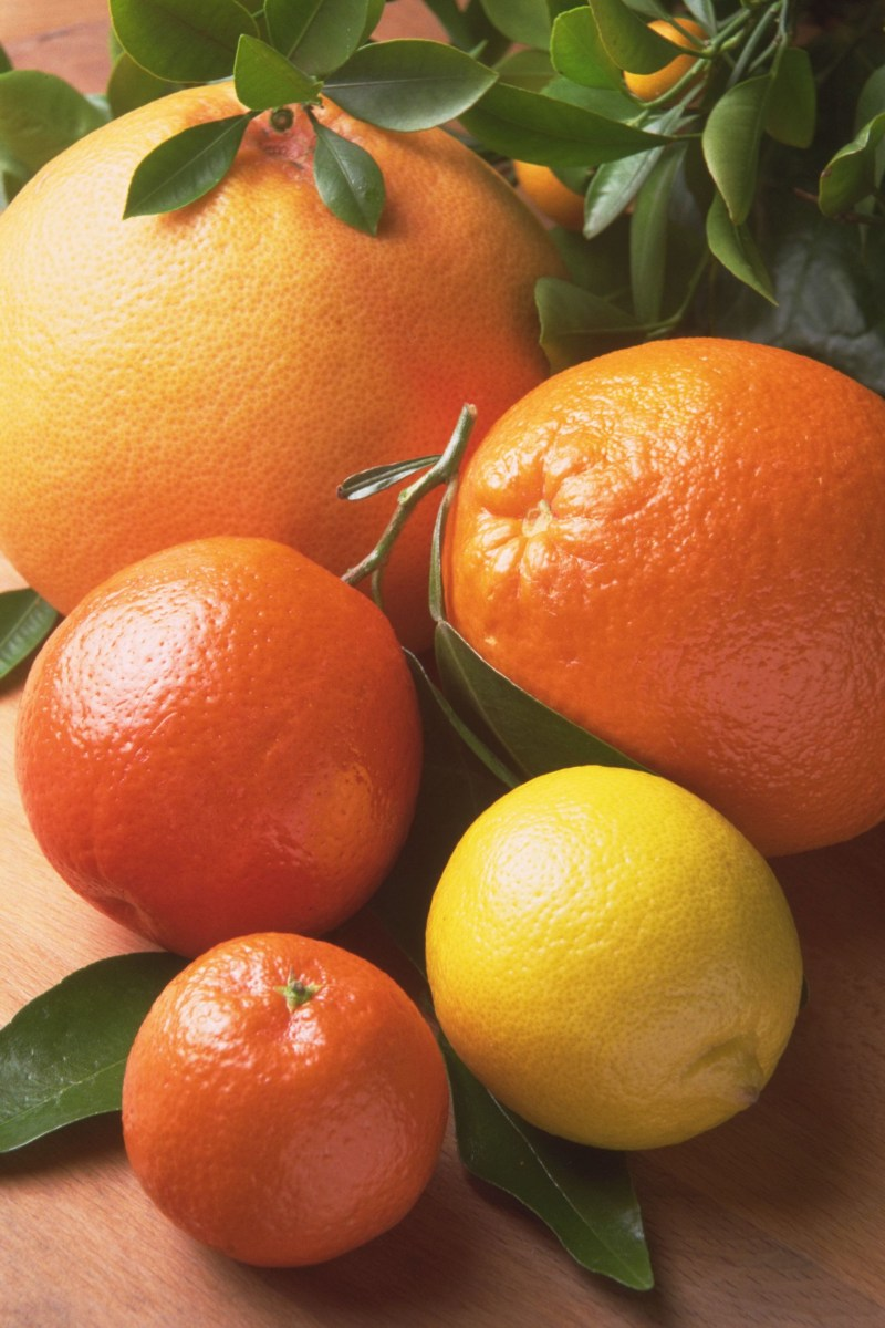 Fresh citrus fruits orange yellow