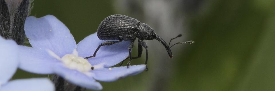"""Cliquez sur la photo pour accéder à la galerie """"insectes"""""""