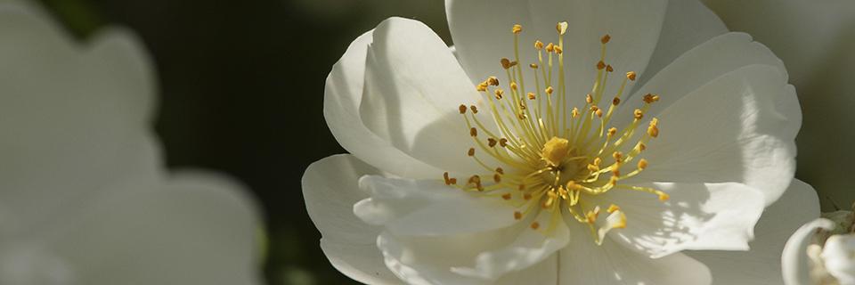 """Cliquez sur la photo pour accéder à la galerie """"fleurs ornementales"""""""