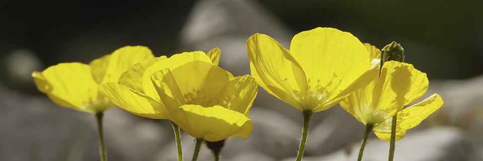 """Cliquez sur la photo pour accéder à la galerie """"fleurs naturelles"""""""