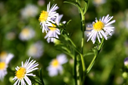 Flowers online 2018 white flower with yellow center name flowers white flower with yellow center name these flowers are very beautiful here we offer a collection of beautiful cute charming funny and unique flower mightylinksfo