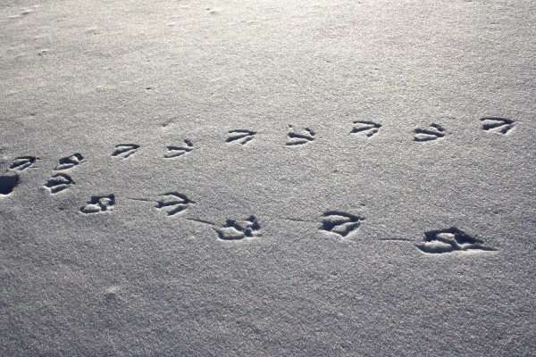 Footprints in the Snow or Wild Goose Chase? ABC 20/20's reporting on Grazzini-Rucki case raises questions about journalistic integrity (Public Domain: http://www.photos-public-domain.com)