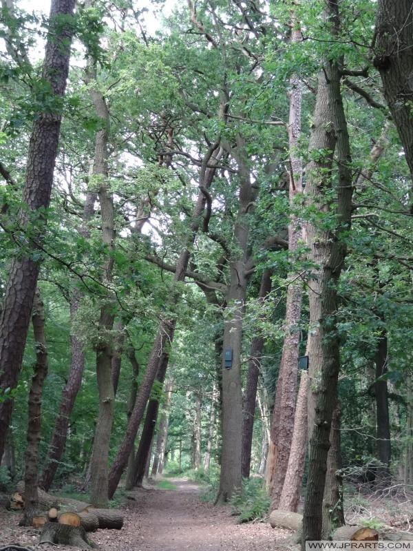 vogelhuisjes in de bomen van het Asserbos (Assen, Nederland)
