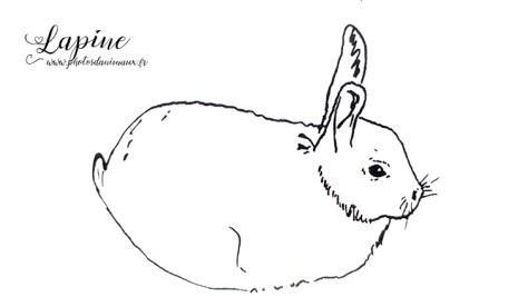 Coloriage animaux : la lapine