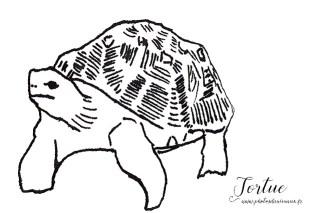 Coloriage animaux : la tortue