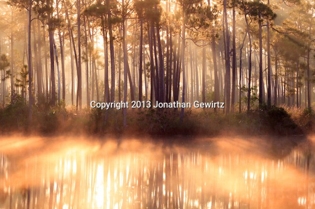 Sunrise fog and reflections at the Long Pine Key pond in Everglades National Park, Florida. (Jonathan Gewirtz   jonathan@gewirtz.net)
