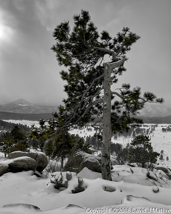 Lone Tree with a Winter Storm Approaching. Rocky Mountain National Park. Image taken with a Nikon D2xs camera and 14-24 mm f/2.8 lens (ISO 100, 14 mm, f/11, 1/125 sec). (David J Mathre)