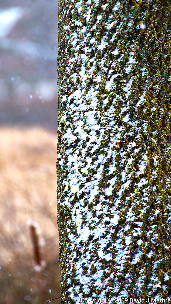 Snow on Tree Bark During a Winter Snowstorm at the Sourland Mountain Preserve. Nikon D300 18-200 mm f/3.5-5.6 VR lens (ISO 400, 200 mm, f/5.6, 1/320 sec). (David J. Mathre)