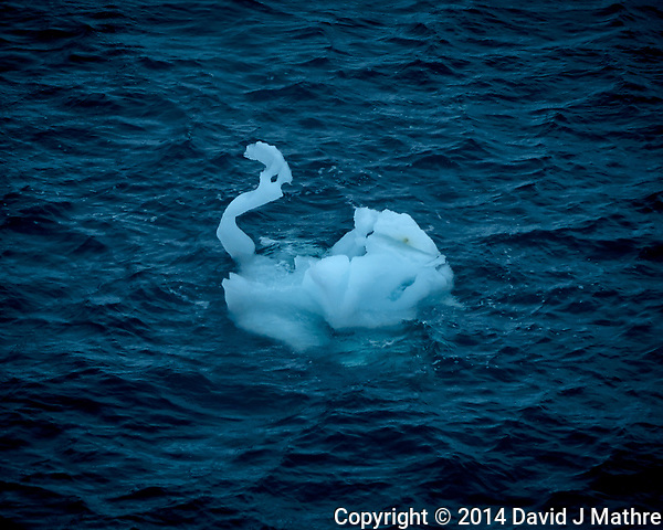 Ice Swan from the deck of the MS Fram. New Years Eve 2014. Image taken with a Leica T camera and 18-56 mm lens (ISO 100, 56 mm, f/11, 1/125 sec). Raw image processed with Capture One Pro, Focus Magic, and Photoshop CC. (David J Mathre)