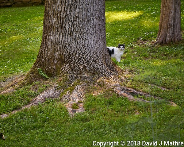 Black and White Cat trying to Hide Image taken with a Leica TL2 camera and 60 mm f/2.8 macro lens. (David J Mathre)