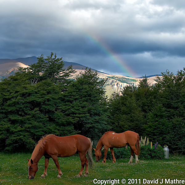 Two Horses Grazing under a Rainbow in the Backyard of Hosteria El Pilar in El Chalten, Argentina - Patagonia. Image taken with a Nikon D3x and 50 mm f/1.4G lens (ISO 800, 50 mm, f/5.6, 1/320 sec). (David J Mathre)