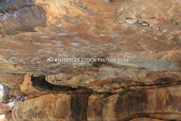 A small huddle of microbats near Ruby Falls on the Kimberley coast.  There are 22 species of microbats on the Kimberley coast. (Annabelle Sandes/© Annabelle Sandes | Kimberley Media 2011)