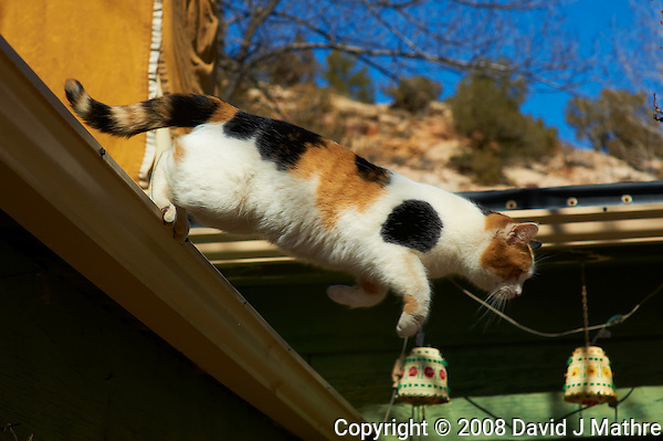 "Cat Jumping off Roof for Breakfast. Elderhostel ""Southwest Photography"" Workshop Day 2. Kelly Place Cortez Colorado. Image taken with a Nikon D3 and 85 mm f/1.4D lens (ISO 200, f/8, 1/1000 sec) (David J Mathre)"