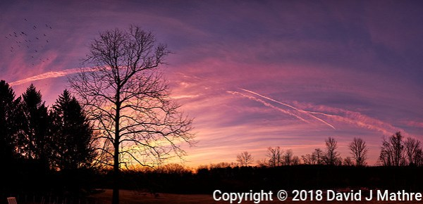 Dawn Morning Clouds, Contrails, and Birds. Winter Backyard Nature in New Jersey. Composite of 7 images taken with a Fuji X-T1 camera and 16 mm f/1.4 lens (ISO 200, 16 mm, f/5.6, 1/30 sec). Raw images processed with Capture One Pro and the composite generated with AutoPano Giga Pro. (David J Mathre)