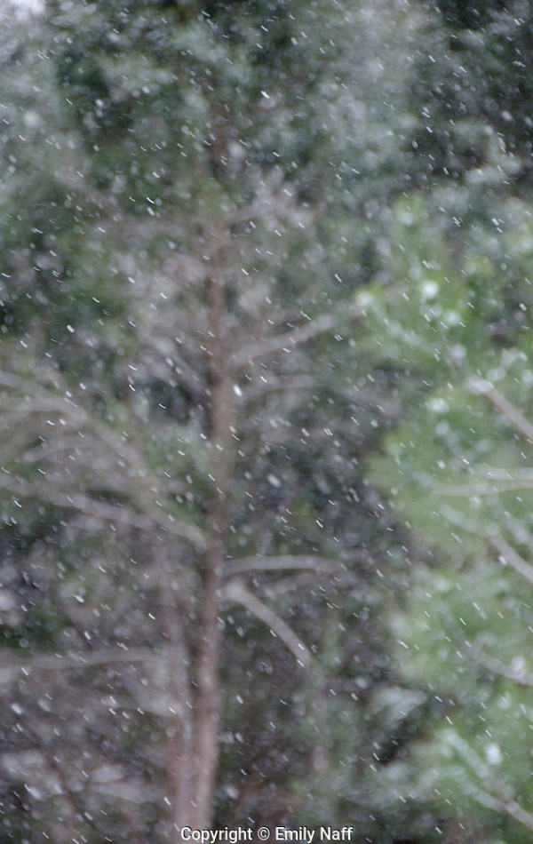 In autofocus mode, the camera kept trying to focus on the trees in the background. Switching to manual mode allowed control of focus to make the falling snow sharp and to blur the trees in the background. (Emily Naff)
