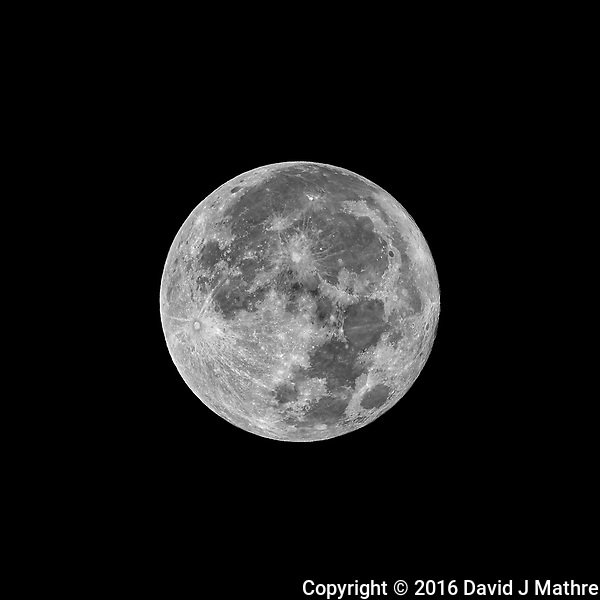 Full Moon. Autumn Nature in New Jersey. Image taken with a Nikon D800 camera and 500 mm f/4 VR lens (ISO 100, 500 mm, f/5.6, 1/800 sec). (David J Mathre)