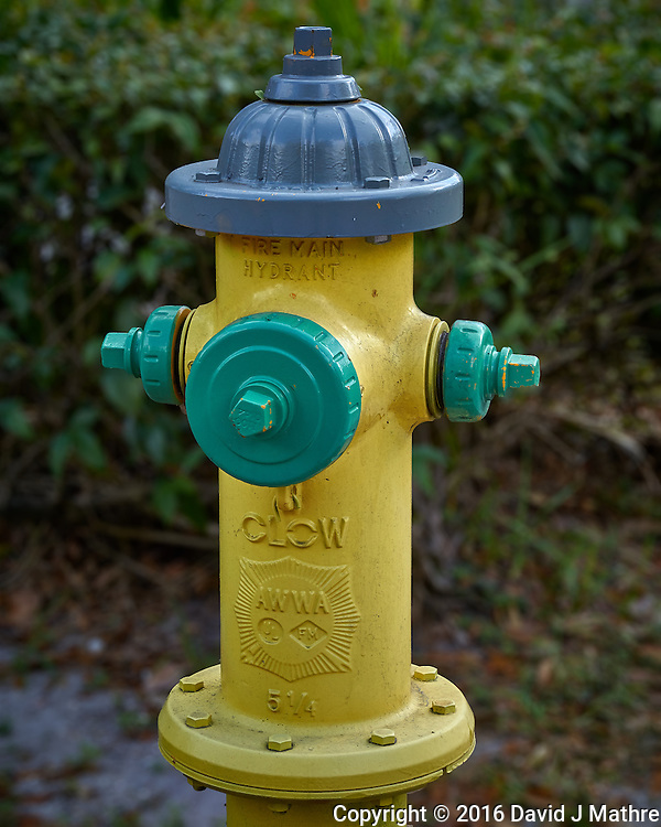 """Multi-colored fire hydrant in the """"Old Northeast"""" section of St. Petersburg, Florida. Image taken with a Leica T camera and 55-135 mm lens (ISO 200, 55 mm, f/7, 1/160 sec). (David J Mathre)"""