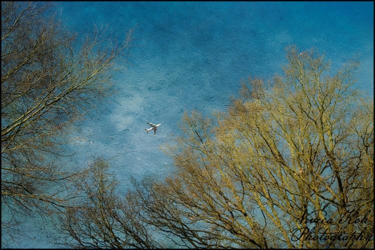 Aeroplane and trees in Richmond Park (Viveca Koh)