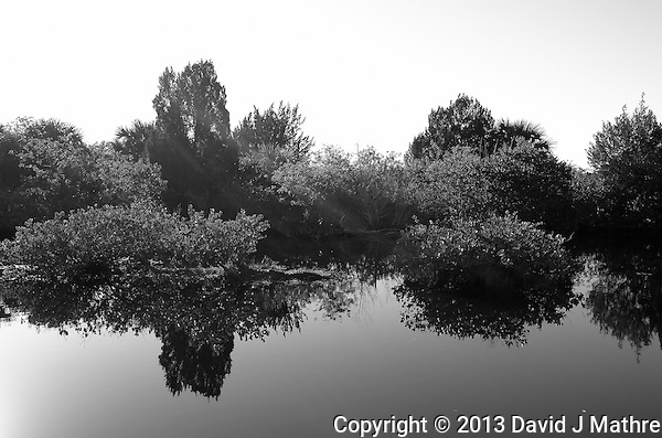 Can You Find the Alligator? Reflections on a Canal along Black Point Wildlife Drive in Merritt Island National Wildlife Refuge. Image taken with a Leica X2 camera (ISO 100, 24 mm, f/5.6, 1/640). In camera B&W. (David J Mathre)