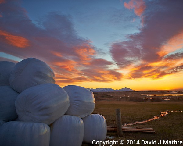 Plastic Covered Hay Bales at the Smylabjörg Farm and Guesthouse on the East Coast of Iceland. Image taken with a Nikon Df camera and 24 mm f/1.4G lens (ISO 100, 24 mm, f/1.4, 1/500 sec). (David J Mathre)