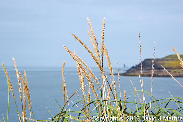 Icelandic Grass Seed and Driftwood on the coast of Vestmannaeyjar Iceland. Image taken with a Nikon 1 V2 camera and 10-100 mm VR lens (ISO 160, 39 mm, f/5.6, 1/1000 sec). Nikonians Academy Iceland Photo Adventure. (David J Mathre)