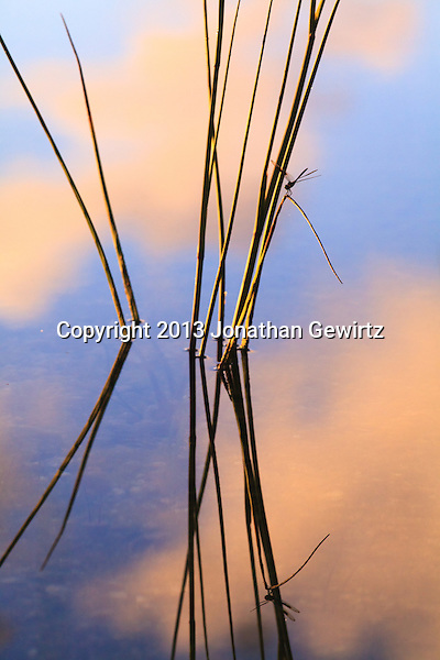 A dragonfly rests on pond reeds at Long Pine Key in Everglades National Park, Florida. (Jonathan Gewirtz   jonathan@gewirtz.net)